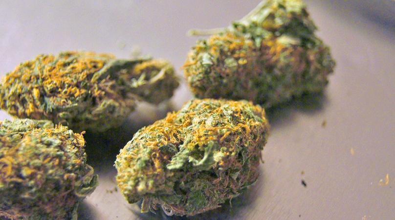 Original Colorado Cannabis Tour in Denver