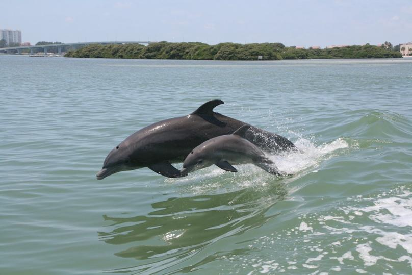 Dolphin Adventure in Clearwater Beach