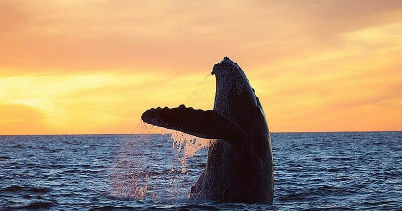 Whale Watching & Boat Tour in Cabo San Lucas