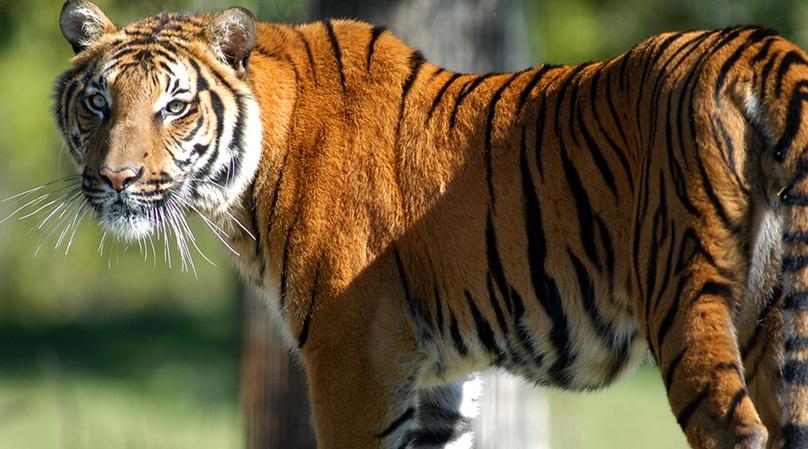 Zoo Miami Safari Experience