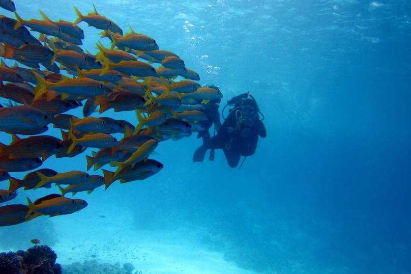 Two-Tank Scuba Diving Trip in Boynton Beach