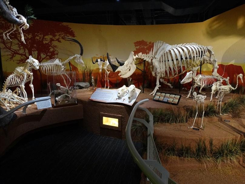 General Admission to Skeletons Museum of Osteology Orlando