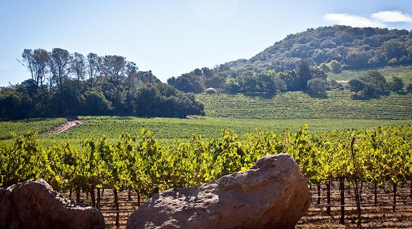 Private Driver Service in Sonoma Valley