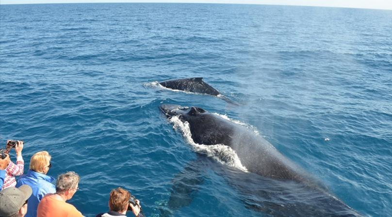 San Diego Whale Watching Sailing Tour