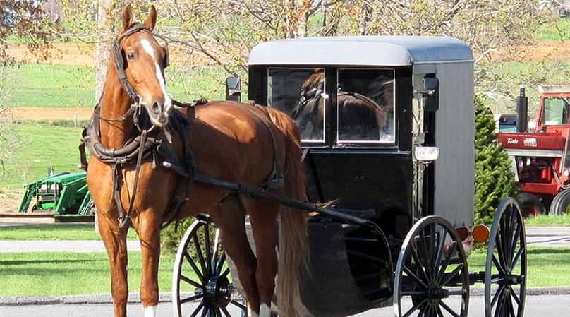 Half Day Amish Heritage Tour in Lancaster County