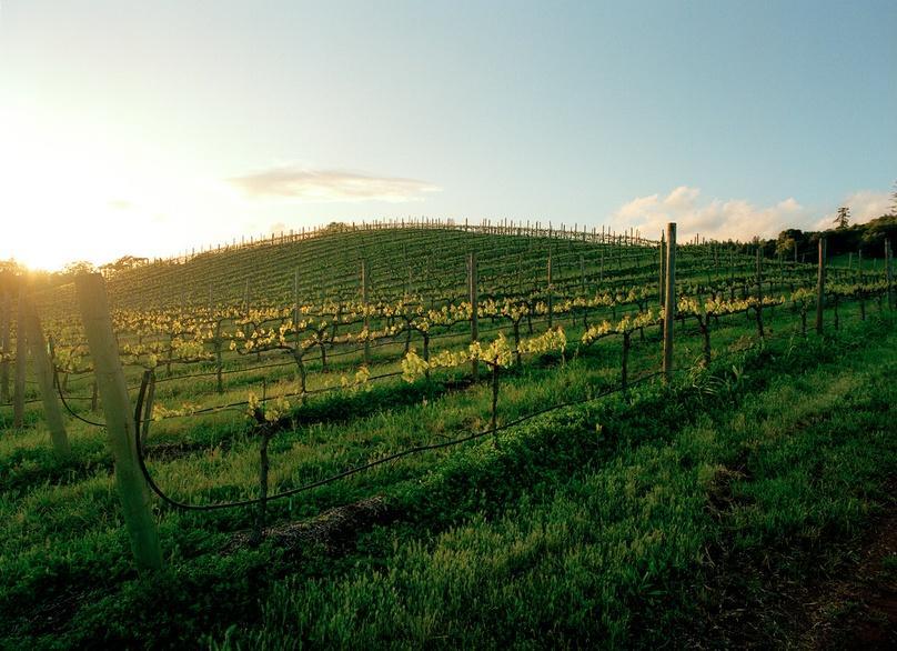 Napa Wine History Tour