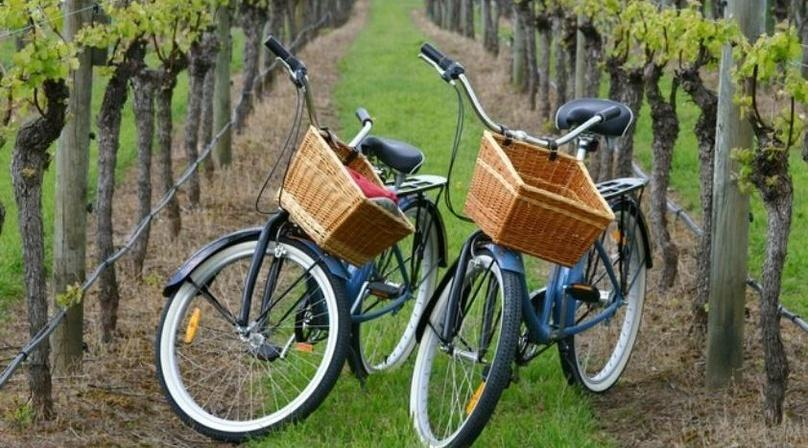 Guide Bike and Vineyard Wine Tour