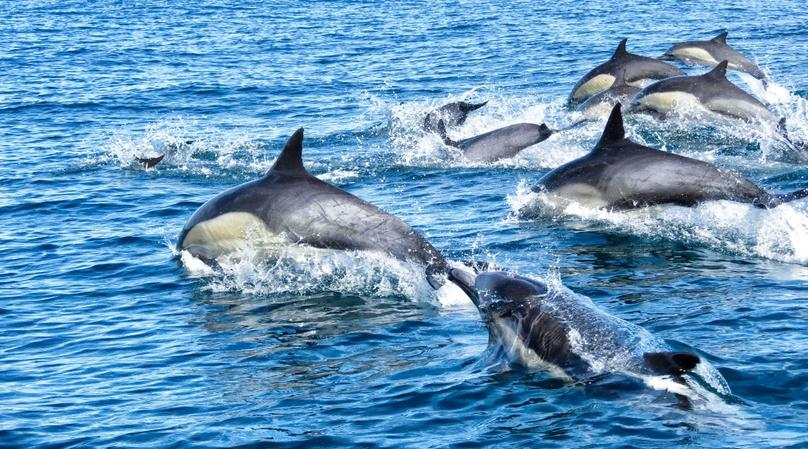 San Diego Dolphin & Sea Lion Cruise For Two