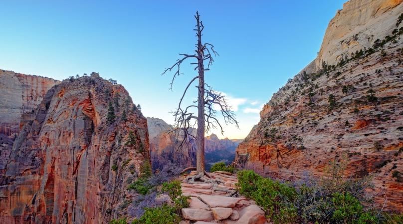 Full-Day Zion National Park Tour