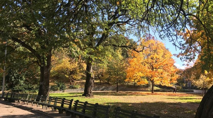 Mount Morris Park Historic Walking Tour with Lunch