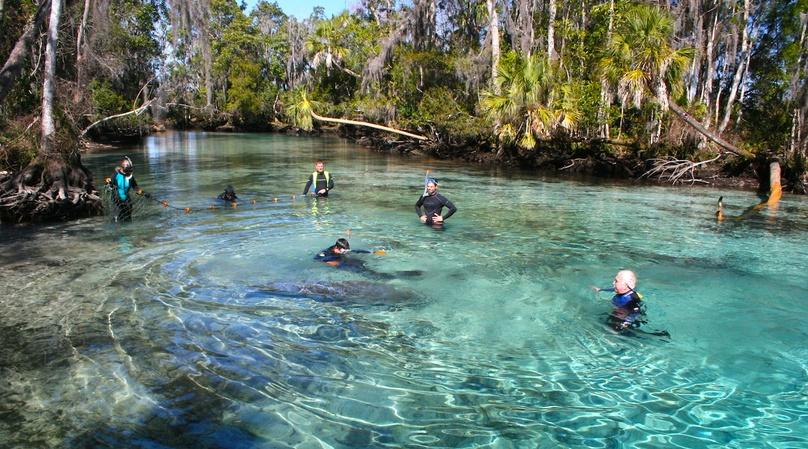 Kayak & Snorkel Adventure on the Crystal River