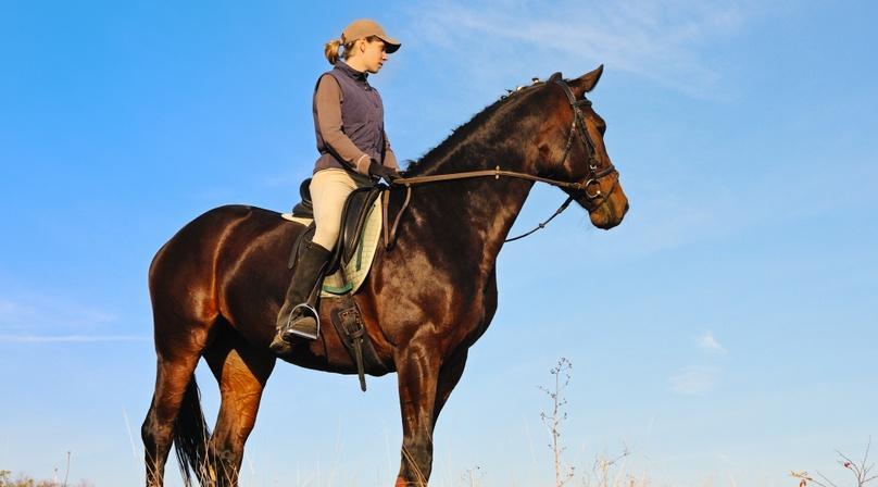 One-Hour Horseback Ride in Malibu Creek State Park