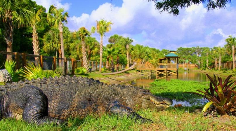 Everglades Wildlife Park Admission