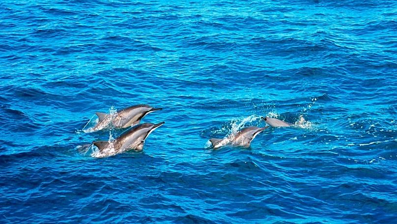 Two-Hour Dolphin Boat Tour around Hilton Head