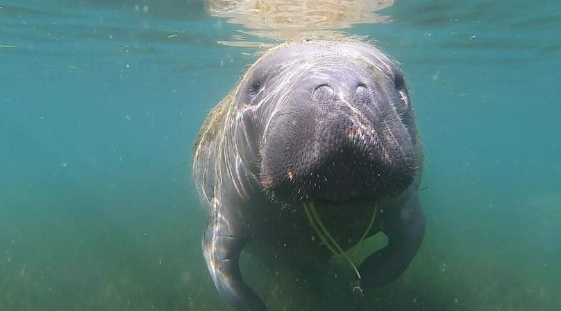 4-Hour Party Board Rental and Manatee Viewing in Crystal River