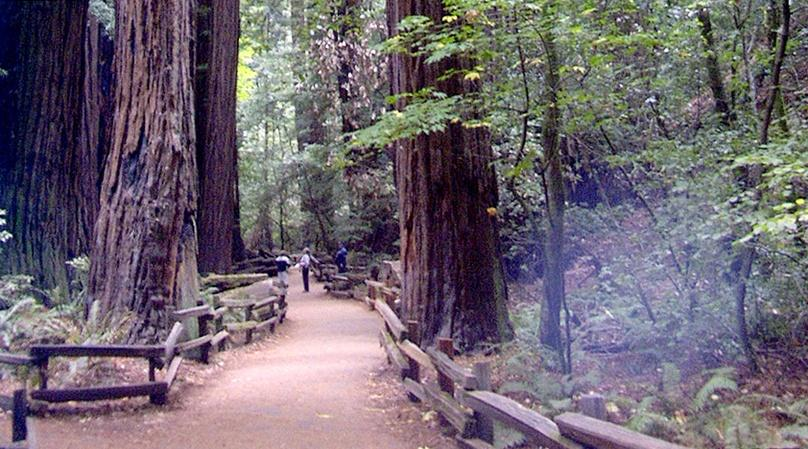 City & Muir Woods Insider Tour
