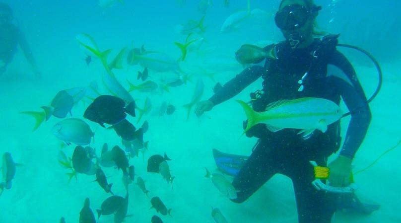 Two-Tank Scuba Diving Adventure in Cabo Pulmo