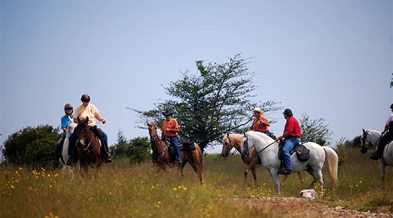 Historical Temecula Horseback Wine Tour & Tasting