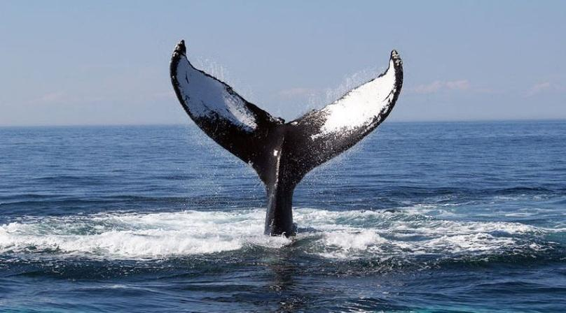 3-Hour Private Whale Watching Tour (2 - 6 persons)