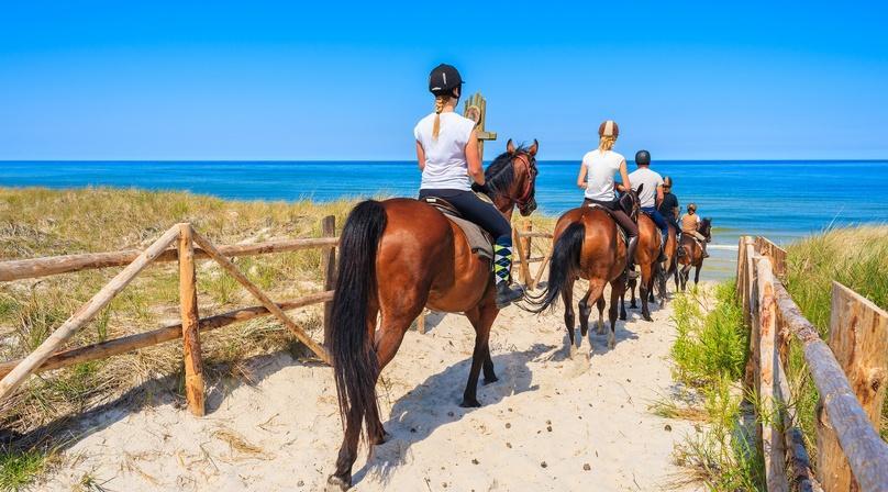 Baja Beach Horseback Tour