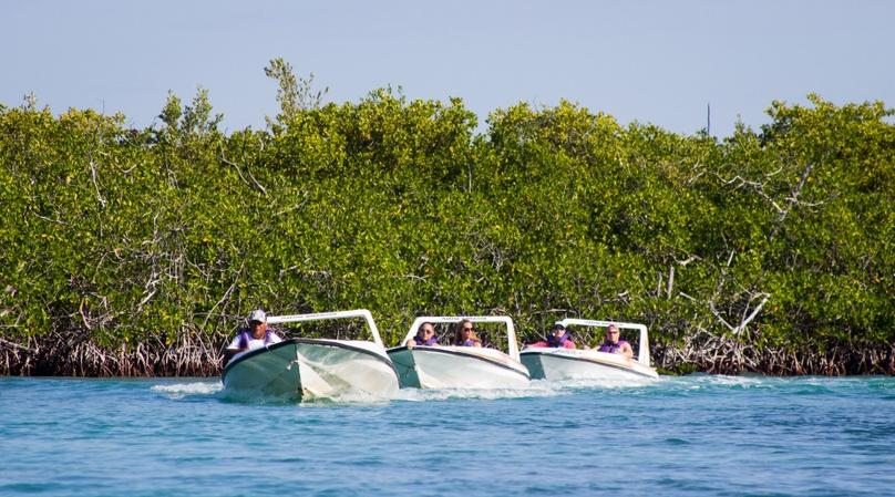 Mangrove Sightseeing Speed Boat Tour in Cancun