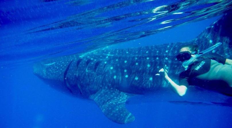 Whale Shark Tour from Riviera Maya