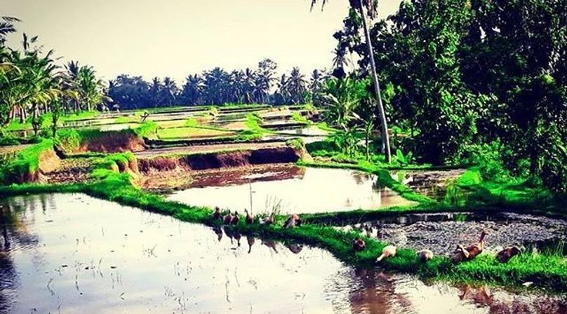 Guided Tour of Ubud & Volcanoes
