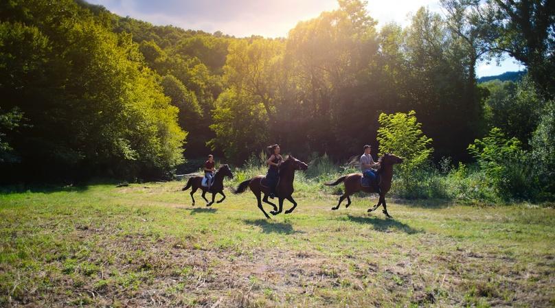 Waipi'o Naalapa Stables Horseback Tour in Honokaa