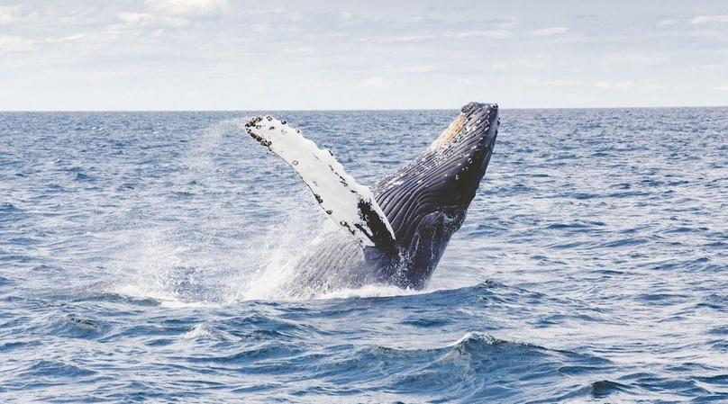 Sunset Whale Concert Tour in Cabo San Lucas