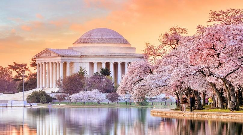 The Cherry Blossom Tour in Washington DC