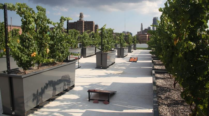 Wine Tasting & Tour of NYC's Rooftop Vineyard