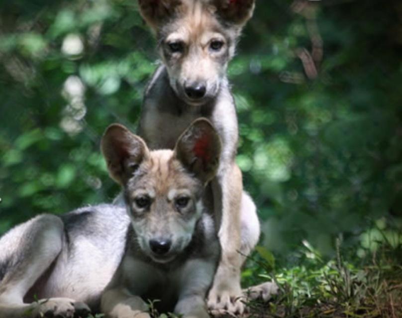 Wolf Den Field Trip