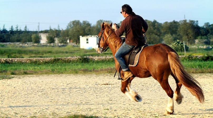 Scenic Horseback Riding Lesson in Miami