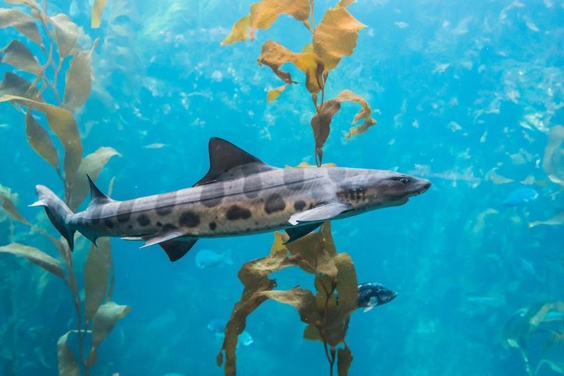 Leopard Shark Snorkeling Tour in San Diego