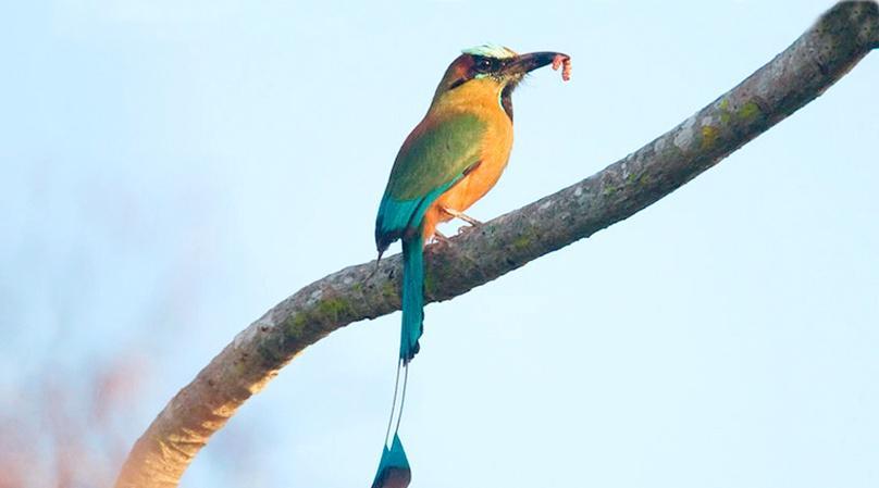 Little Bird Island Nature Tour