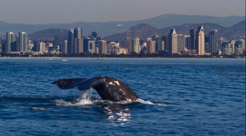 Private Group Charter on San Diego Bay