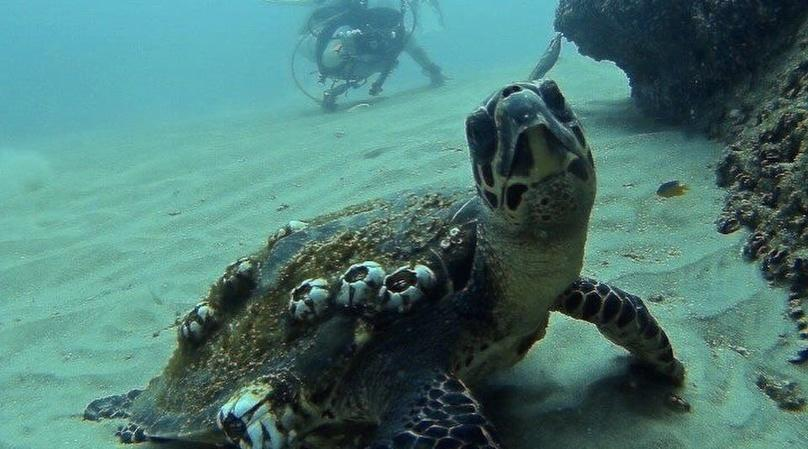 2-Tank Dive in Cabo San Lucas