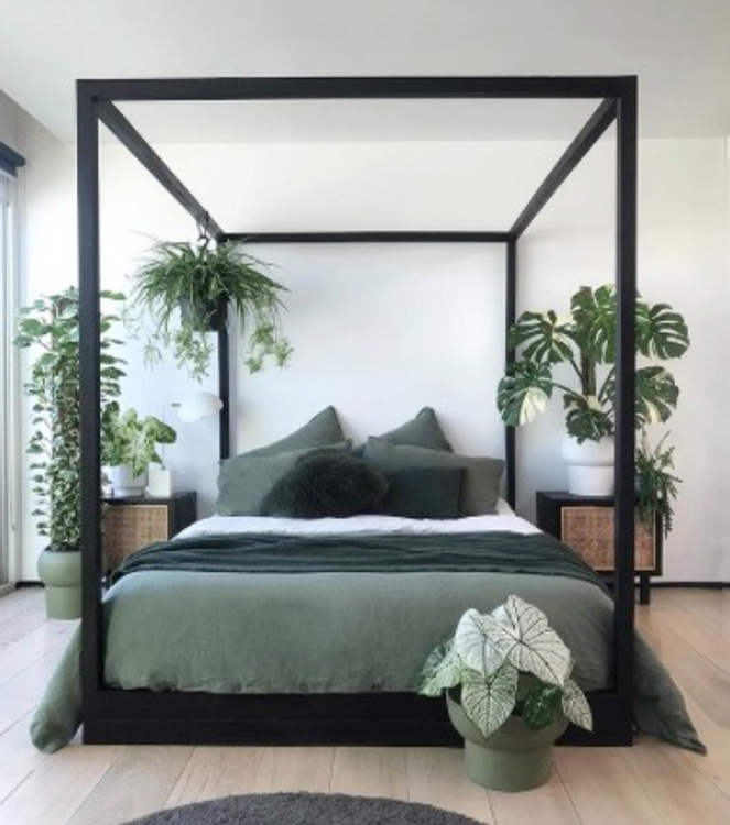 bed with houseplants