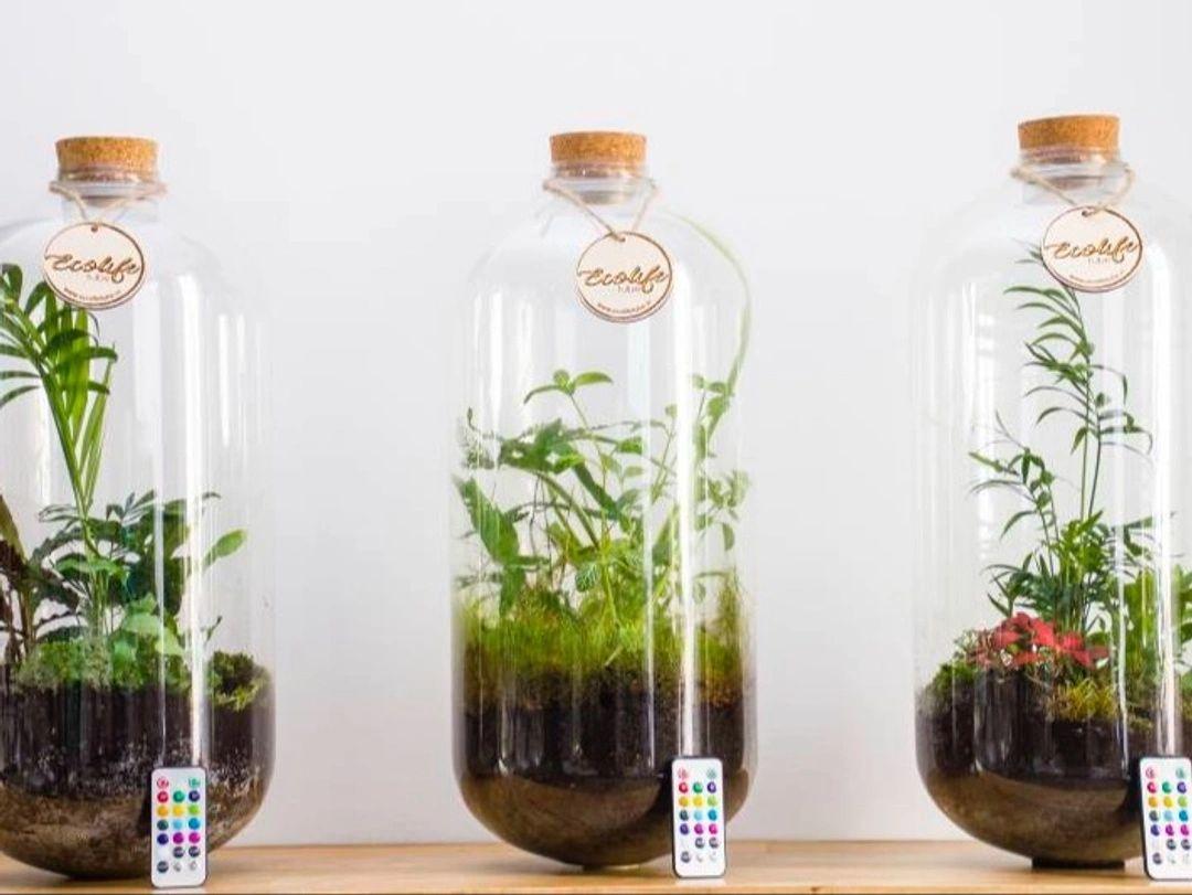 Workshop Ecosysteem maken
