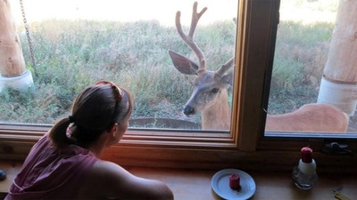 The Deer Story: A Lesson in Living in the Moment