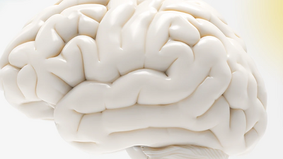 Mental Health and Brain Science