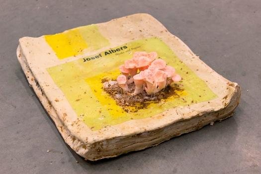 joseph albers pluerotus mushroom pink copy copy lores.jpg