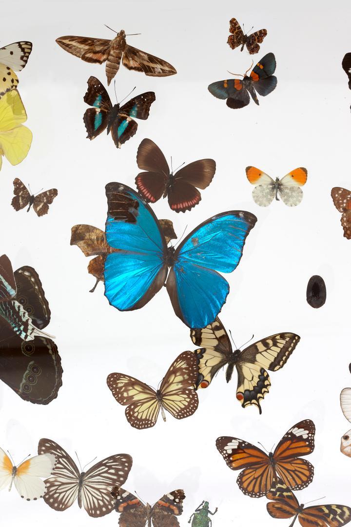 Vitrine papillons detail.jpg