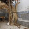 Courtyard 6, Synagogue Keter Torah, Sousse, Tunisia, Chrystie Sherman, 7/17/16
