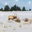 The K Family - Hiring in Montana City