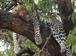 6days kenya luxury safari