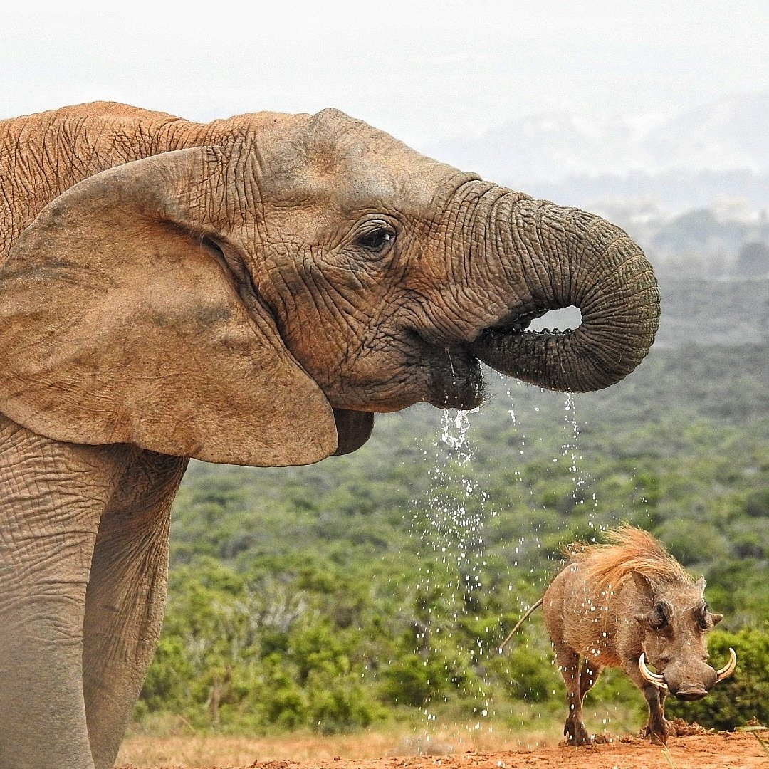 Kruger National Park Safari and Panorama Route Tour