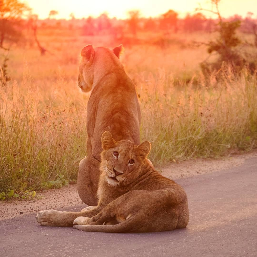 Kruger National Park and Panorama Route Safari - small group special