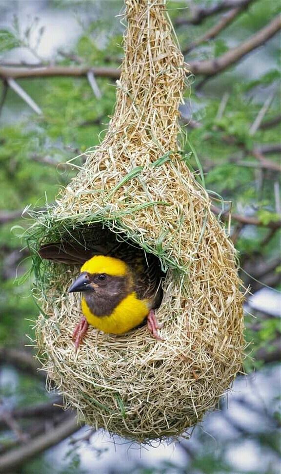 20 Days Uganda Birding Photography Safari