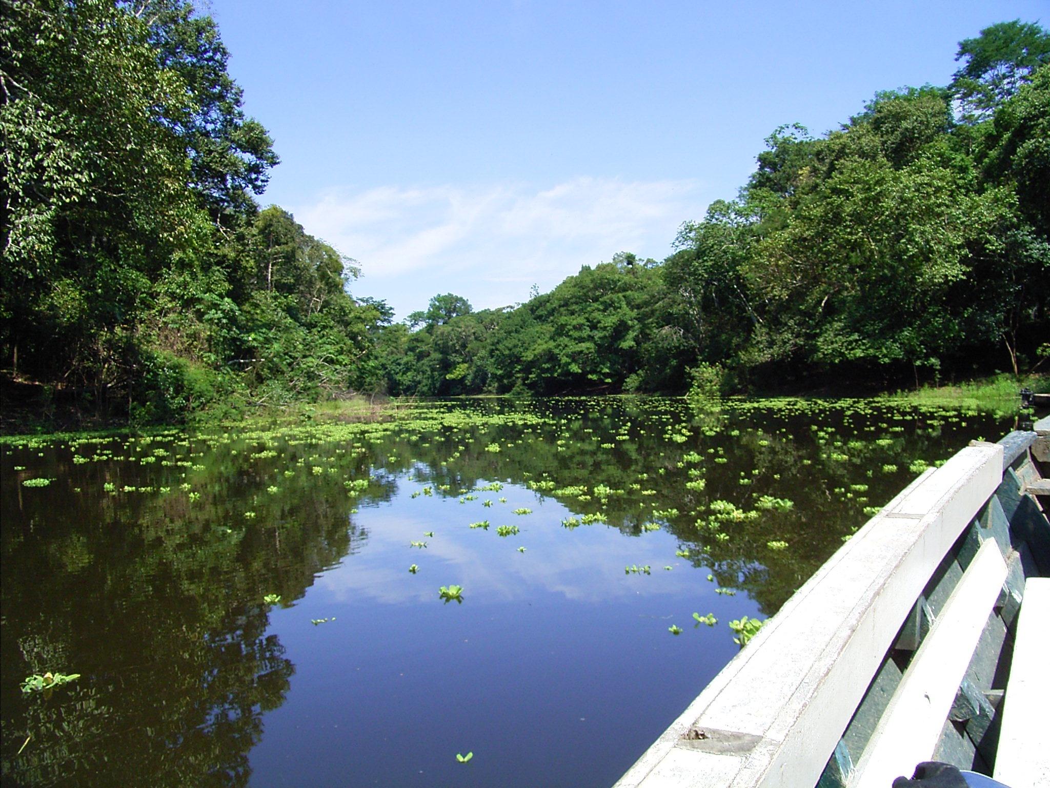 Tambopata Amazon Jungle